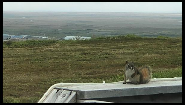 FIRST DOCUMENTED— A red squirrel made it to Nome and onto the James family's porch. It is the first documented red squirrel this far northwest in Alaska.